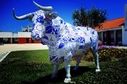 Camino Portuguese-069