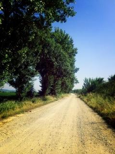Camino Portuguese-081