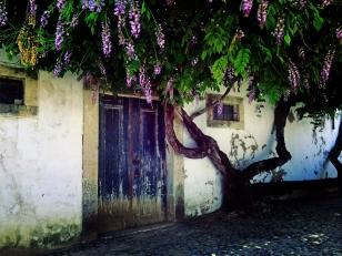 Camino Portuguese-085