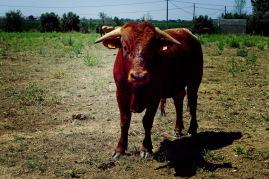 Hi Bull!