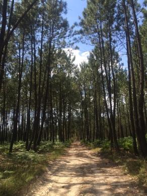 Camino Portuguese-280