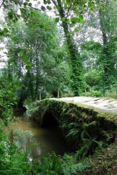 Camino Portuguese-564