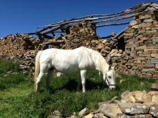 A horse in front of a crumbling down building in Foncebadon