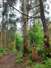A beautiful walk through Eucalptus forests