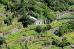 Cliff-top vineyards