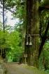 Shikoku 88 Temple Pilgrimage-0264