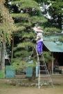 Pruning the trees at Temple 29, Kokubunji