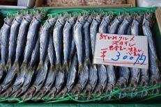 Fish at Kochi market