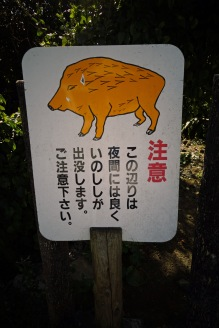 (Warning, wild boars are often seen in this area at night-time, please be careful)