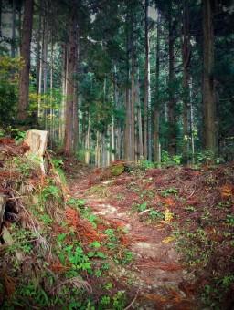Shikoku 88 Temple Pilgrimage-097