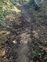 Tell-tale signs of a wild boar, the upturned soil