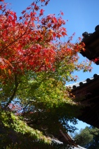 Autumn colours at Temple 81, Shiromineji