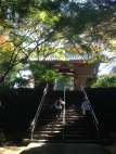 Temple 82, Negoroji