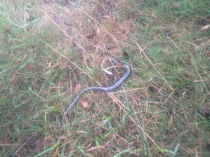 Another small snake. Viveros?