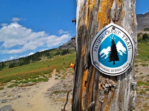Image result for pct