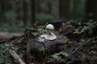 Tiny little jizo-san on a tree stump on the Choishimichi trail