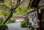 Cherry blossoms at Hongu Taisha