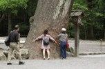 Tree-hugging in Ise Naiku Shrine, Ise