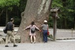 Tree-hugging in Ise Naiku Shrine, Ise