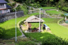 Rice terraces in Hadasu along the Iseji route