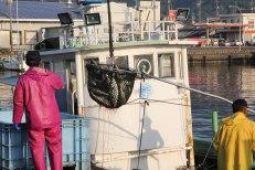 Fishermen unloading last night's catch at Owase harbour, Iseji route