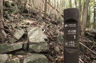 These numbered wooden markers are placed 500 metres apart along the Nakahechi trail