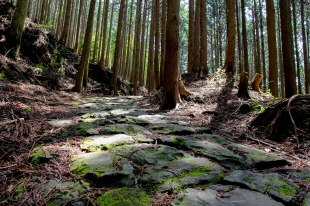 Moss-covered stone path along the Nakahechi