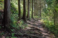 Tonda zaka slope, Ohechi route