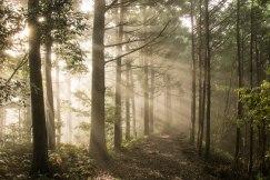 Early morning rays on the Kogumotori-goe trail