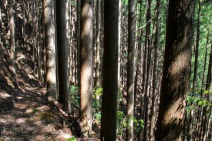 Kohechi trail