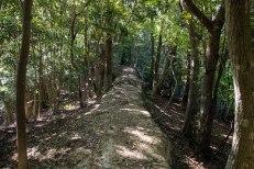 Tree-tunnel ridge along Nagai zaka slope, Ohechi route