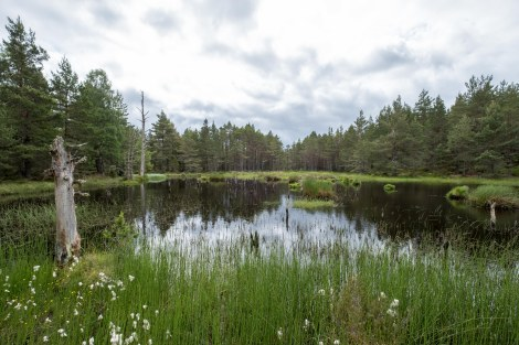 Passing wetlands in the Abernethy Forest National Nature Reserve
