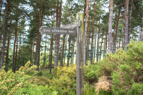 Speyside Way waymarks