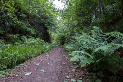 Following an old railway line between Dufftown and Craigellachie