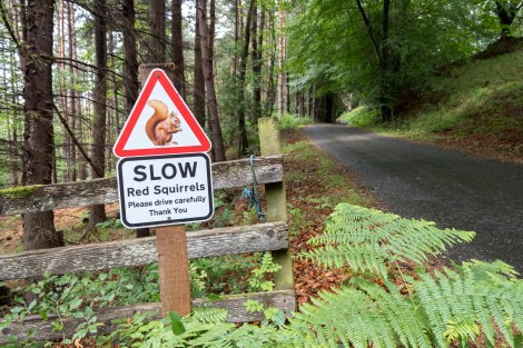Red squirrel sign