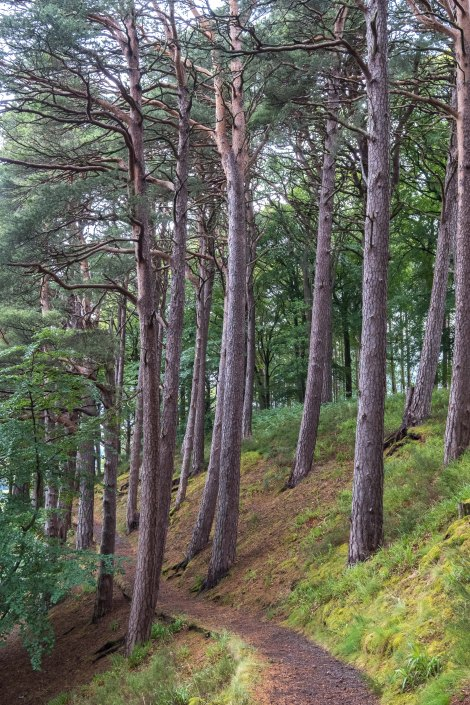 This is the beautiful side-trail to see the Earth Pillars before Fochabers