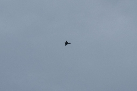 I heard and sometimes saw these fighter jets every other day on this trip to Scotland. This one flew over while I was at the Scottish Dolphin Centre.