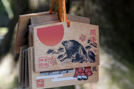 Ema votive tablets at Miyazaki-jingu Shrine - this year is the year of the boar
