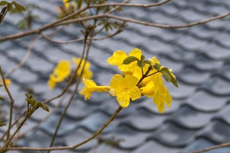 Flowers of Mimitsu