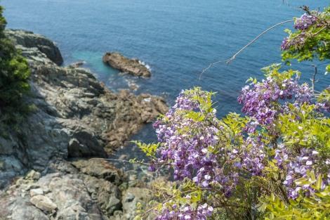 Wisteria by the sea