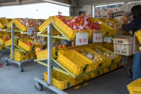 There's something like 70 different types of citrus in Shikoku, here's just a few