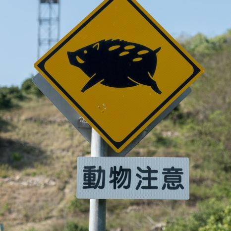 Watch out for wild boar (inoshishi) along the Shimanami Kaido cycling path