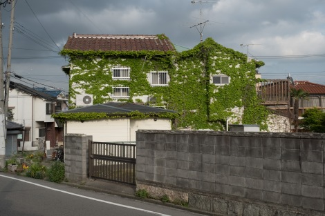 I liked this ivy covered building