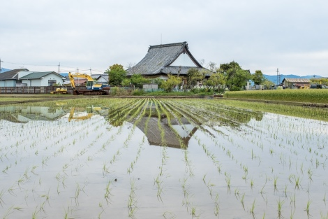 Rice paddy reflections on this overcast day