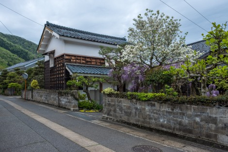 Magnolia, wisteria and a traditional Japanese warehouse building called a 'kura'