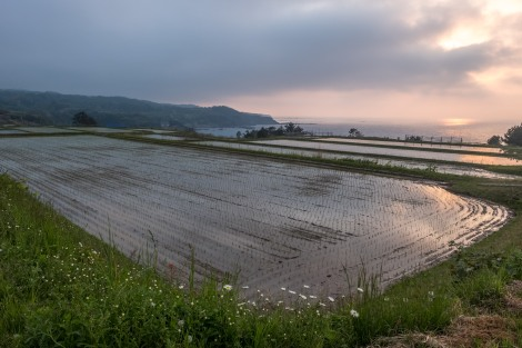 Sado Island rice fields