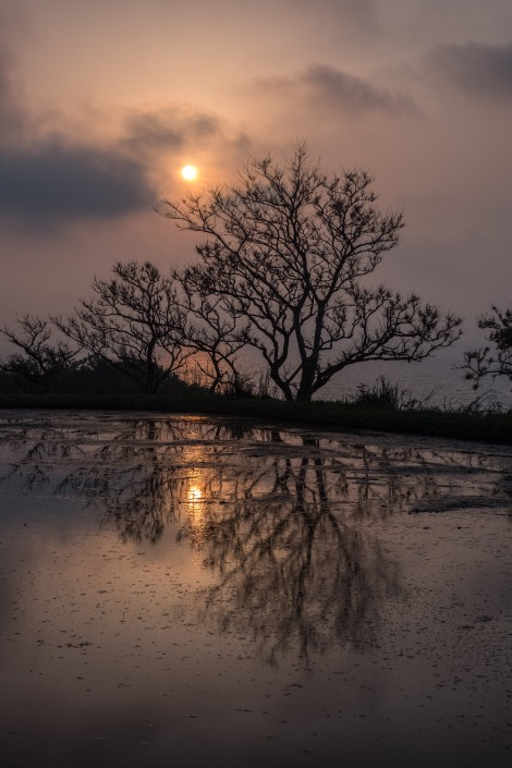 Sunset rice paddy reflections