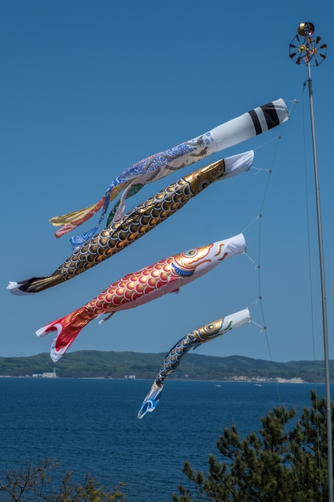 Carp kites flying at Shimafumi bakery & cafe, Sado Island