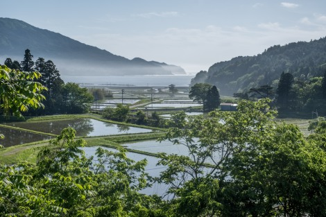 Rice paddies meet the sea near Kamaishi