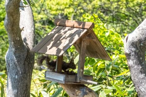 A small squirrel visits Kanji and Mieko's garden